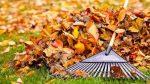 Greblatul frunzelor de toamnă