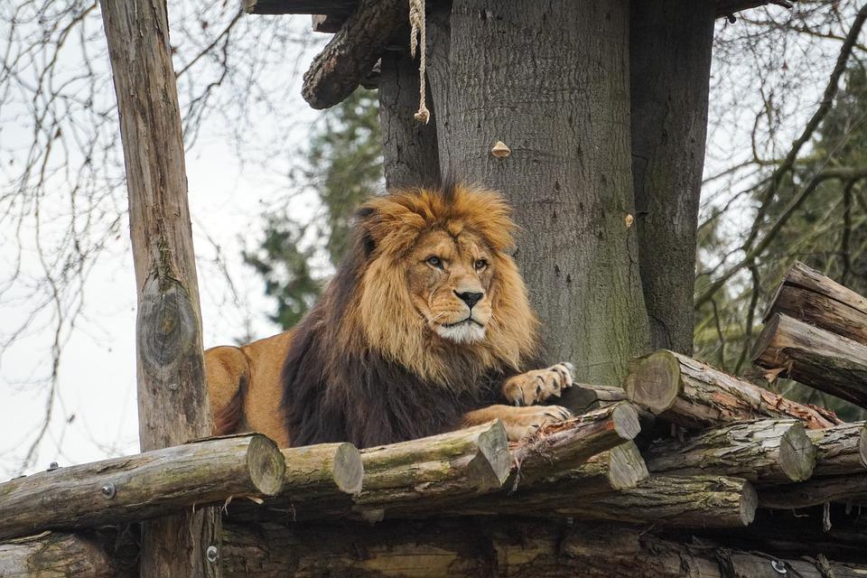 VIDEO LIVE: Vizitează online 13 grădini zoologice prin live streaming -  Observatorul de Nord